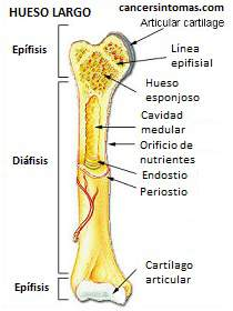 partes do osso