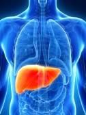 Câncer de fígado (hepático)